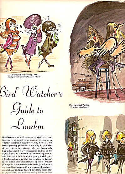 Bird Watcher's guide to London story 1967 (Image1)