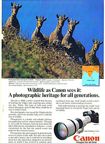 Canon Camera - NILGIRI TAHR(Wild Goat)  1982 (Image1)
