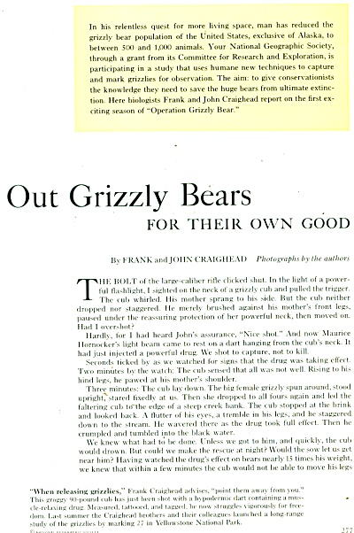 Grizzly Bears Story 1960