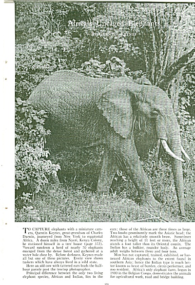 Africa's Uncaged ELEPHANTS - 1951 (Image1)