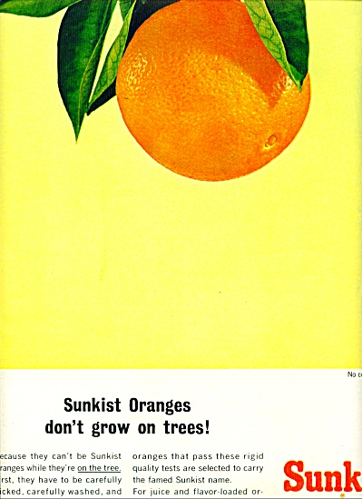1965 SUNKIST ORANGE ORANGES AD COLORFUL (Image1)