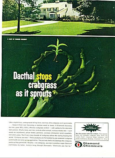 Diamond Chemicals ad -  1963 (Image1)