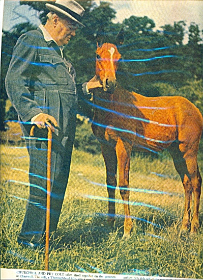 Winston Churchill and his pet colt - (Image1)