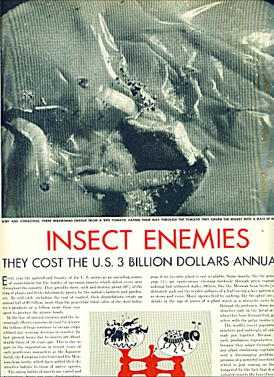 Insect enemies  story. (Image1)