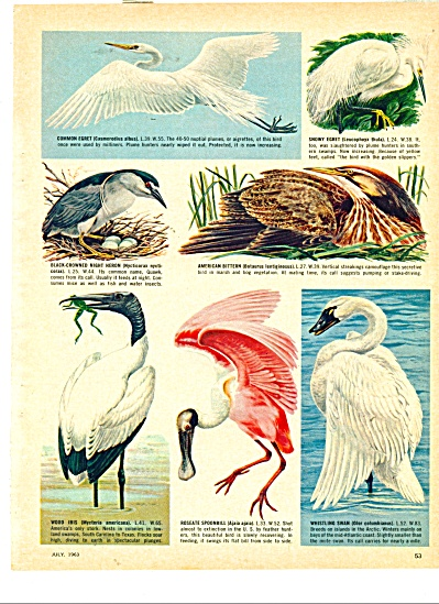 Birds of America - (Guide to)  1963 (Image1)