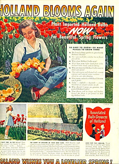 Holland blooms again ad -  1946 (Image1)