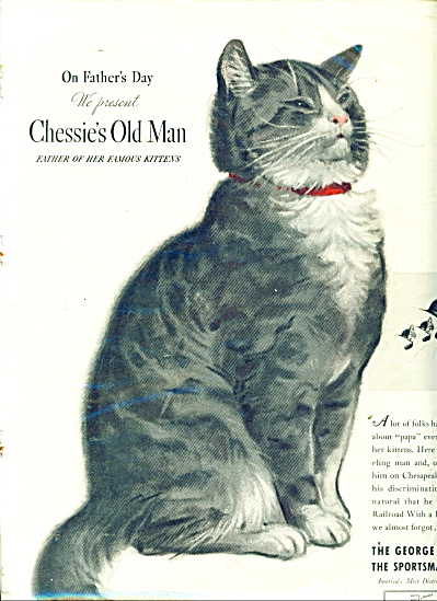 Chesapeake and Ohio Lines ad FATHER CAT AD (Image1)