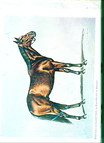 Picture Horse GALLANT MAN - 1957 (Image1)