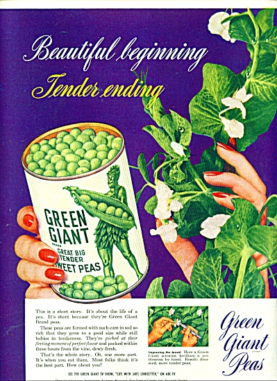 1951 Green Giant Peas Ad Tender Ending