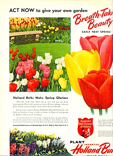 Holland Bulbs this fall ad  1950 (Image1)