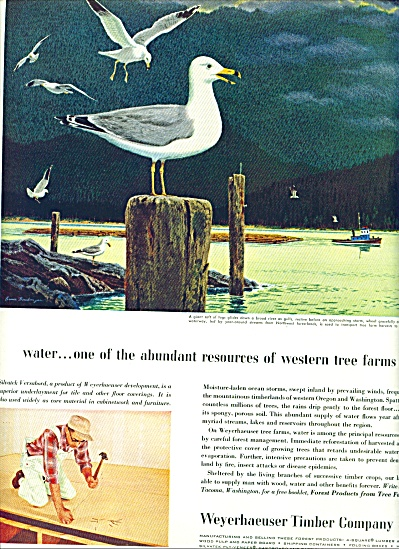 1959 -  Weyerhaeuser Timber Company ad (Image1)