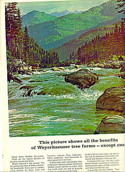 1967 - Weyerhaeuser tree farms ad (Image1)