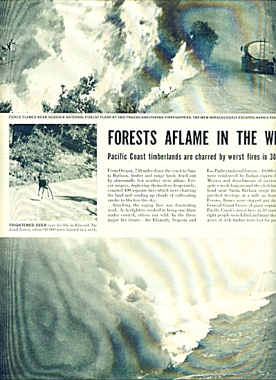 1955 - Forest aflame in the west story (Image1)