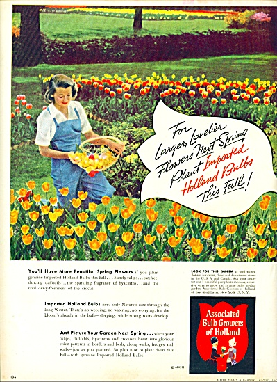 1947 -  Associated bulb growers of Holland ad (Image1)