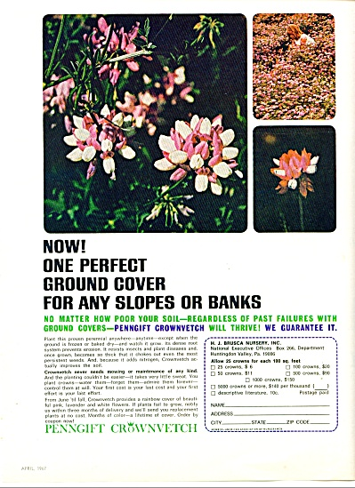 1967 -  Penngift crownvetch - H. Brusca (Image1)