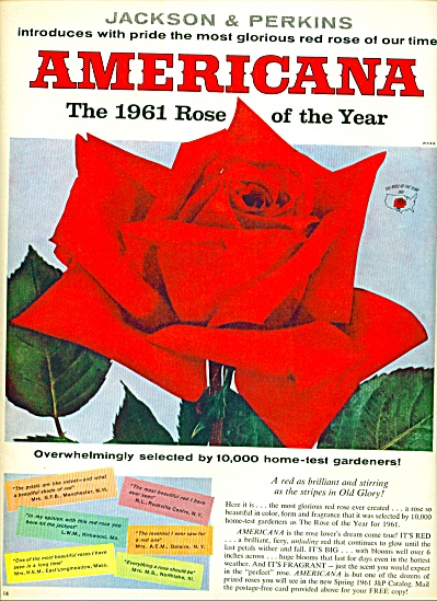 1961 -  American - rose of the year ad (Image1)