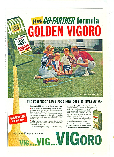 Vigoro lawn food ad 1960 (Image1)