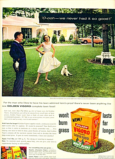 Golden Vigoro lawn food ad 1956 (Image1)