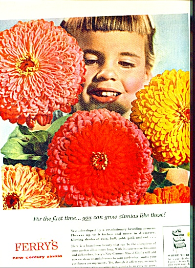 FERRY SEED AD Beautiful  flowers - zinnias ad (Image1)