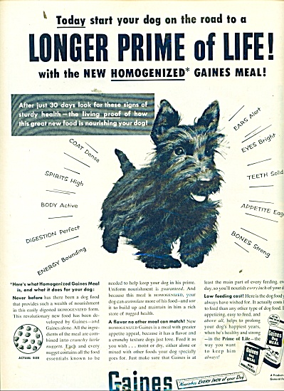 Gaines dog food ad 1953 BLACKIE TERRIER (Image1)
