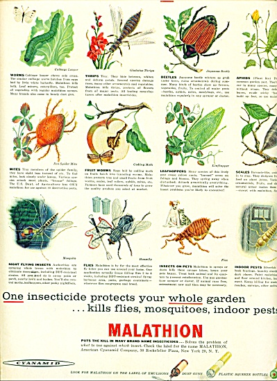 Malathion - Cyanamid - insect killer ad (Image1)