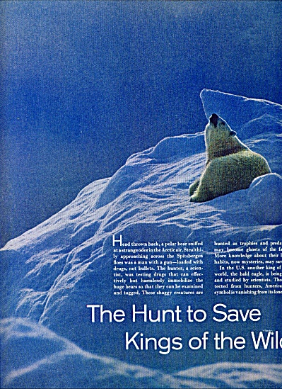 The Hunt to save Kings of the wild story (Image1)