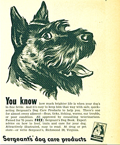 1950 Sergeant's DOG Care AD BLACK SCOTTY ART (Image1)