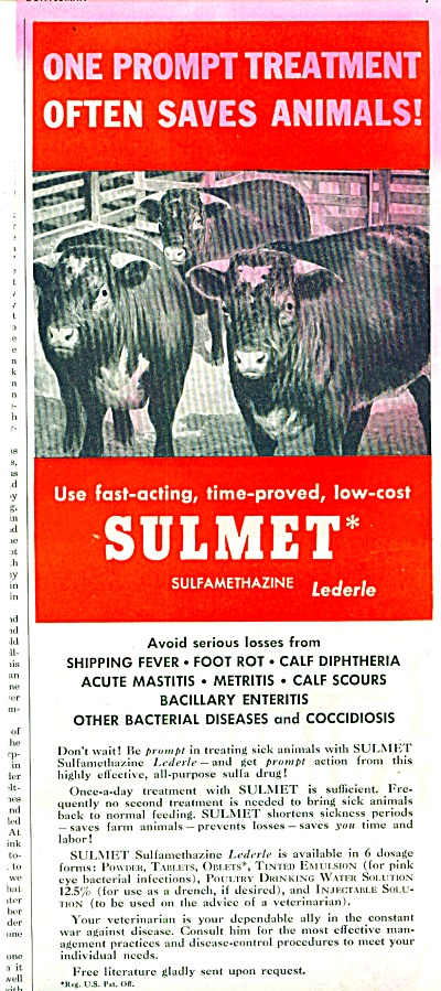 1952 Lederle Labs - Sulmet for COWS Sulfa AD (Image1)