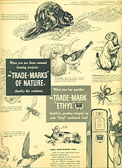 1949 Ethyl Gasoline AD Trademark - Nature ART (Image1)