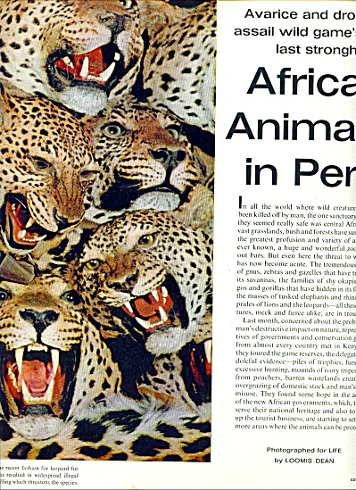 Africa's Animals in Peril series 1963 (Image1)