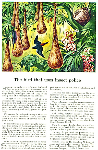 1943 - The bird that uses insect police (Image1)