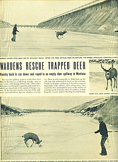1948 -  Wardens rescue trapped deer ad (Image1)