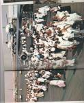 Click to view larger image of Pilgrimage to Mecca   1978 (Image3)