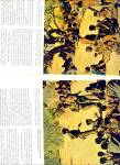 Click to view larger image of BUSHMEN OF THE KALAHARI  story 1963 (Image2)