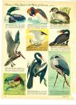 Click to view larger image of Birds of America - (Guide to)  1963 (Image4)
