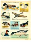 Click to view larger image of Birds of America - (Guide to)  1963 (Image5)