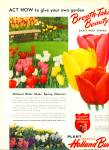 Holland Bulbs this fall ad  1950
