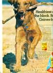 1945 - Gaines burgers for dogs ad