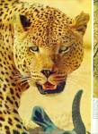 Click to view larger image of 1967 -  The Leopard - Hunting story (Image2)