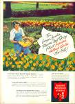 1947 -  Associated bulb growers of Holland ad