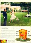 Golden Vigoro lawn food ad 1956