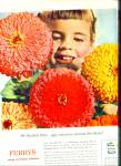 Click here to enlarge image and see more about item Z4166: FERRY SEED AD Beautiful  flowers - zinnias ad