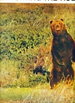 Click here to enlarge image and see more about item Z7357: Hunting the huge Alaska Brown bear story 1957