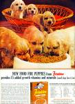 Friskies new food for puppies ad 1963