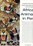 Click to view larger image of Africa's Animals in Peril story & pictures (Image2)