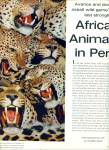 Click here to enlarge image and see more about item Z8396: Africa's Animals in Peril series 1963