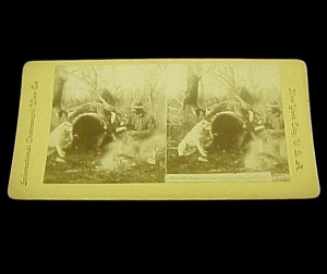 Stereoview Stereoscope Stereo View Card Hunters Camp Dog Deer Hunting