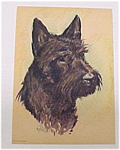 Vintage 1940s Litho Print  Scottie Scotty Dog Picture (Image1)