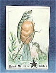 Click here to enlarge image and see more about item 16008: Victorian Trade Card Notter's Coffee Robin Bird