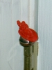 Click to view larger image of Red Hat Society Licensed Door Hingeheads (Image6)